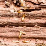 How Does the Sentricon Termite System Work?